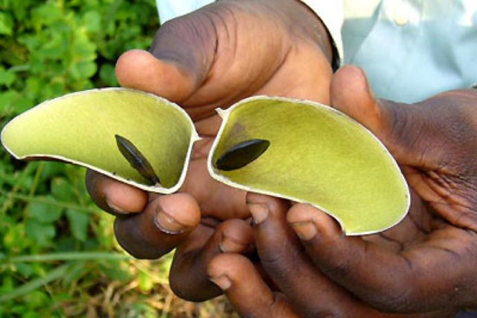 Antidépresseur naturel venu d'Afrique