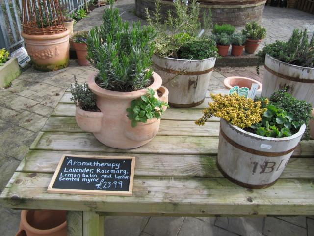 Aromathérapie : le guide pratique des huiles essentielles