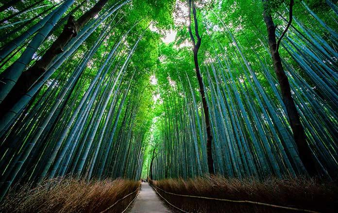 Les bains de forêt, la solution santé « miracle » des japonais