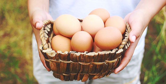Neuf raisons de manger des œufs